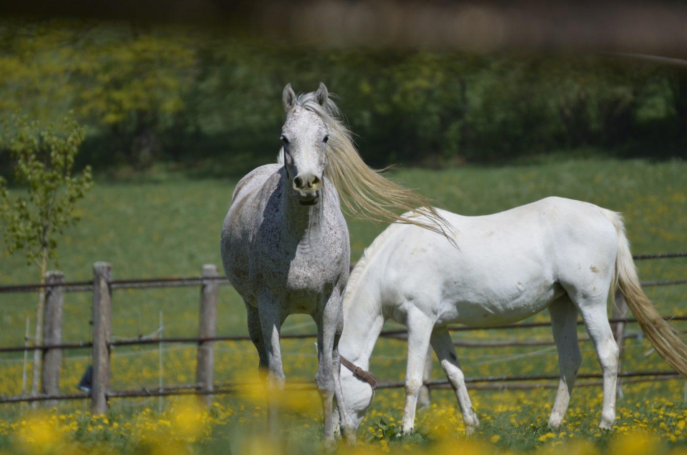 Balance Pads fürs Pferd: Vorteile und die richtige Anwendung
